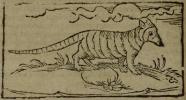 Gravura em Staden, 1557: Die Figur Dattu